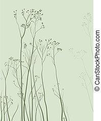 herbier, délicat, fond, nature
