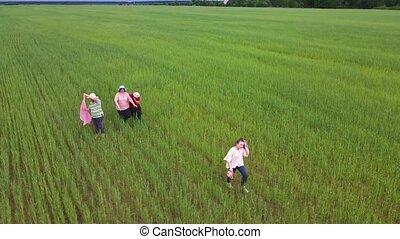 heureux, promenade, field., ensemble, vert, famille, danse