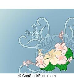 hibiscus, illustration