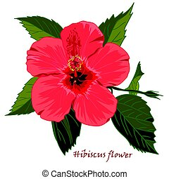 hibiscus, style, fleur, réaliste, isolé, arrière-plan., hand-drawn, blanc