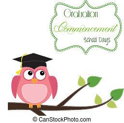 hibou, casquette, branche, remise de diplomes, séance