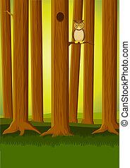 hibou, forêt