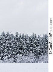 hiver, fond, forêt
