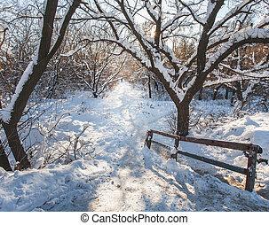 hiver, givré, matin, lit, sun., arbres