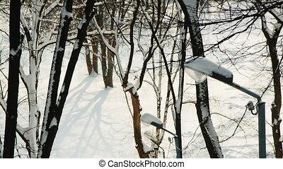 hiver, -, neige, arbres, parc, amende