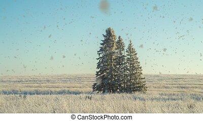 hiver, paysage vidéo, weather., neige-couvert, arbres sapin, cinemagraf, beau, chute neige, champ, ensoleillé, boucle, trois