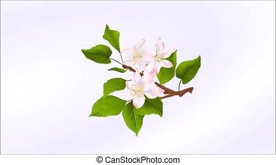 hiver, pomme, printemps, vendange, arbre, seamless, illustration, automne, animation, vidéo, boucle, branche, saison, fleurs, été, pommes