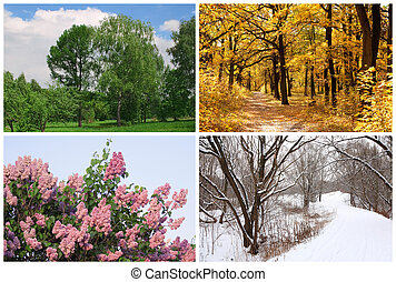 hiver, printemps, collage, automne, arbres, quatre saisons, blanc, frontières, été