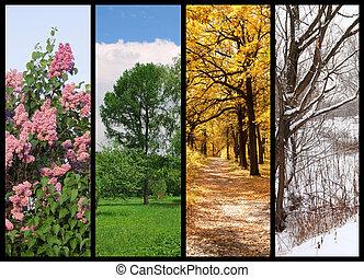 hiver, printemps, collage, automne, arbres, quatre saisons, frontière, été