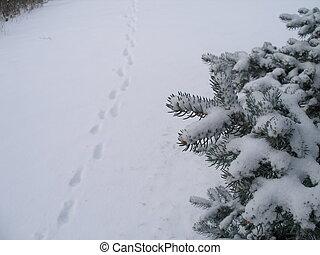 hiver, promenade