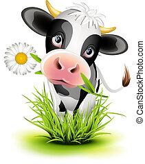holstein, herbe, vache
