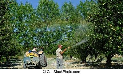 homme, adulte, arbres, pulvérisateurs