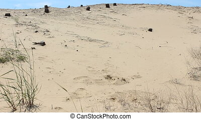 homme, par, désert, promenades