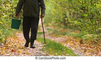 homme, promenades, automne, par, forêt