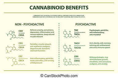 horizontal, avantages, cannabinoid, infographic