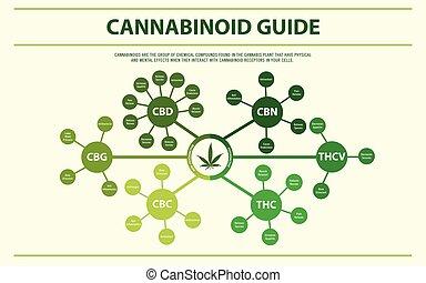 horizontal, cannabinoid, guide, infographic
