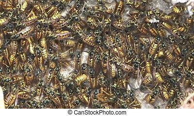 hornet's, nest.