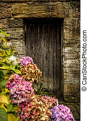 hortensia, antiquité, porte, bois