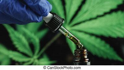 huile, scientifique, cbd, main, chanvre, examiner