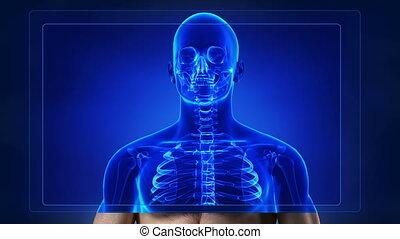 humain, balayage, squelette