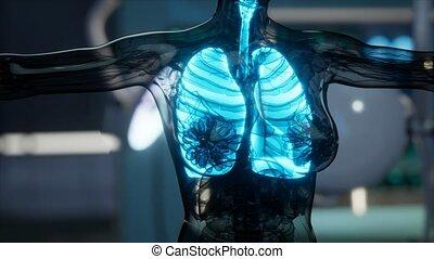 humain, radiologie, laboratoire, examen, poumons