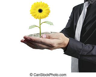 humain, tenue, plante, mains
