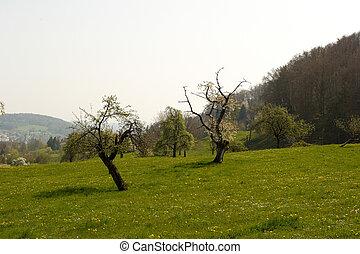 idyllique, pré, arbres