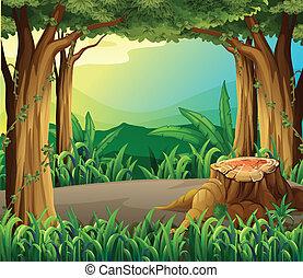 illégal, enregistrement, forêt