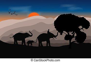 illustration, coucher soleil, lumière, forêt, marche, silhouette, éléphant, vecteur, montagne noire, fond, mahout, image, soir