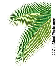illustration., feuilles, arbre, arrière-plan., vecteur, paume, blanc