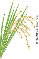 illustration., feuilles, arrière-plan., vecteur, riz blanc, spikelet