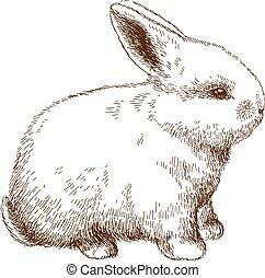 illustration, gravure, lapin, pelucheux