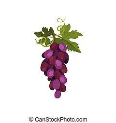 illustration., leaf., vigne, vecteur, raisins, tas