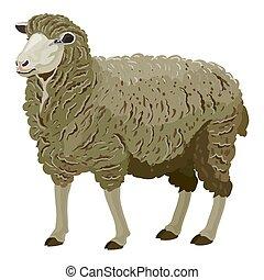 illustration, naturel, fond, style, mouton, blanc, objet, isolé, gris, vecteur