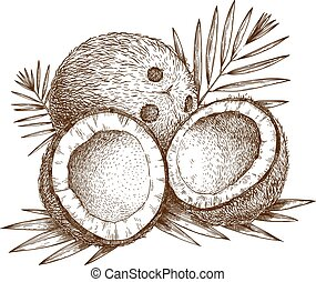 illustration, noix coco