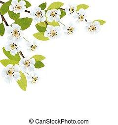illustration., printemps, floraison, arbre, flowers., vecteur, brunch