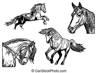 illustrations, cheval