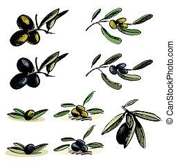 illustrations, olive