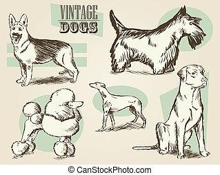 illustrations, vendange, chien