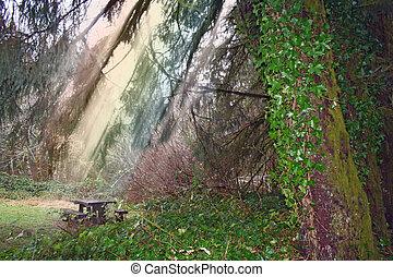 image, après, forêt, pluie, stockage