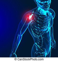 image, dos, douloureux, render, monde médical, épaule, coude, mis valeur, 3d