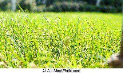image., très, champ, closeup, herbe verte, vent