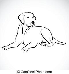 image, vecteur, labrador, chien