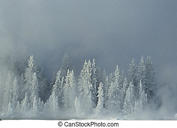 impeccable, couvert, neige