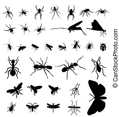 insecte, silhouettes, collection
