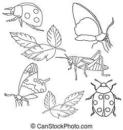 insectes, arrière-plan., blanc, ensemble