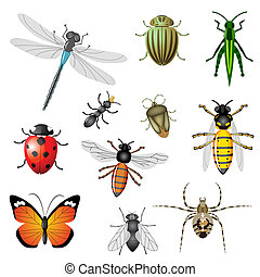 insectes, ou, bogues