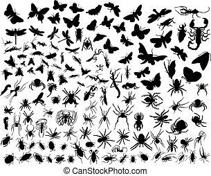 insectes, vecteur