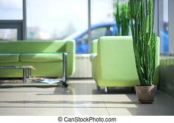 intérieur, sofas, vert, deux, confortable