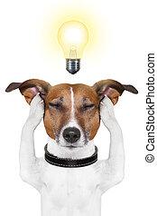 intelligent, chien, intelligent